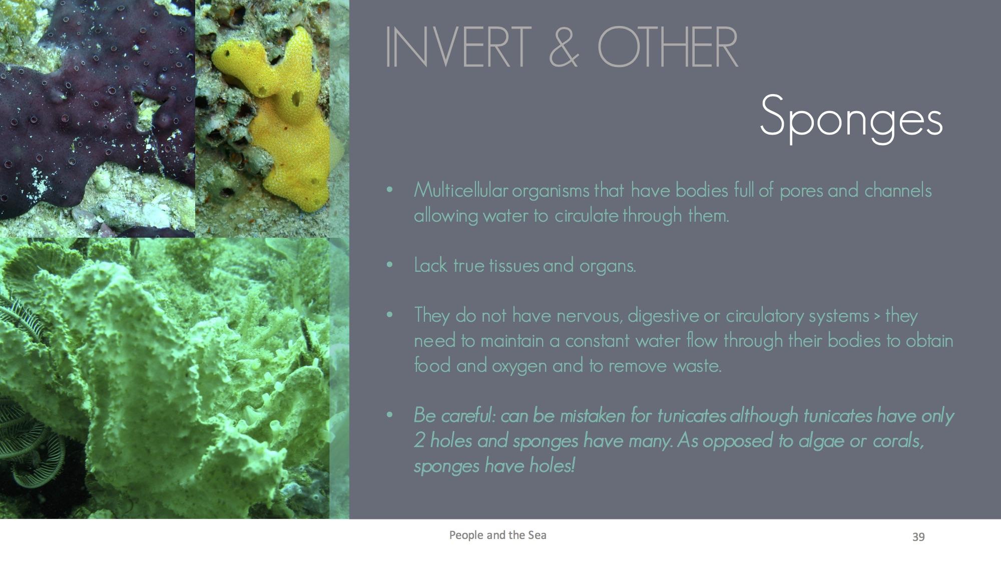 Benthic life form9