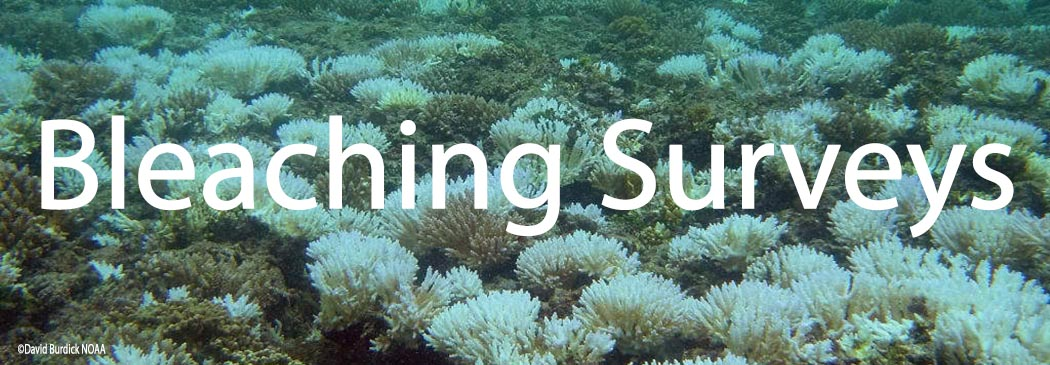 Bleaching events need to be closely monitored - a standard part of our marine surveys