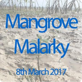The mangrove planting programme helps the community of malapasuca be more resilient in the future
